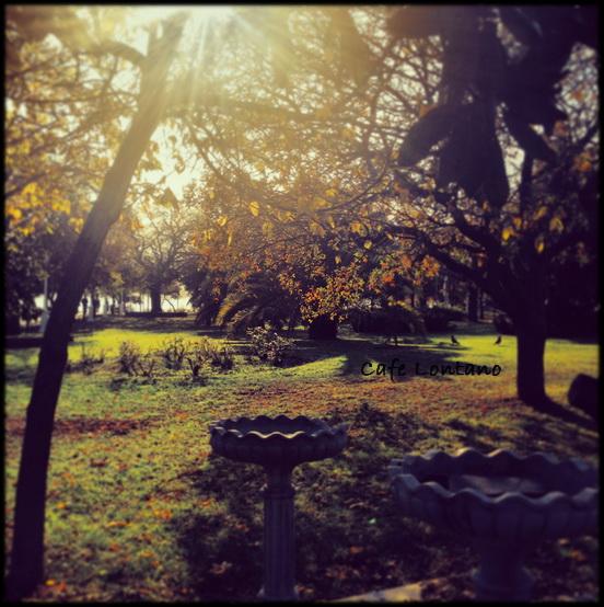 Fenerbahce Parkı 8