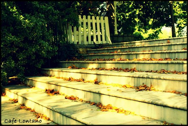 Fenerbahce parkı 4