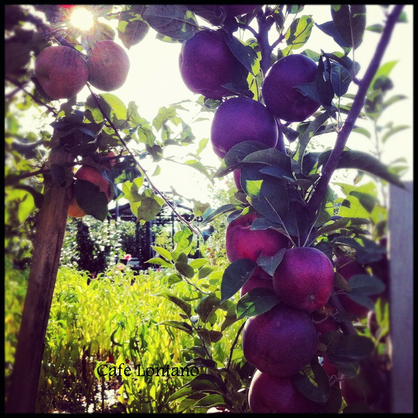 Doğal elmalarla elmalı tart