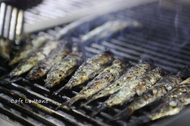 sardines, sardalya, midilli